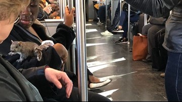 Squirrel initially scares, then snuggles with MBTA riders
