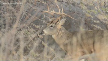 Maine deer, moose hunters enter busy portion of the season