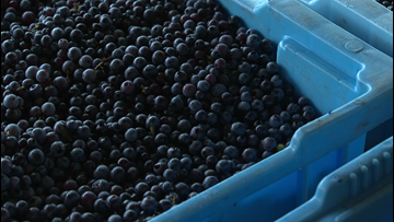 Blueberry growers won't get federal aid to compensate for tariffs