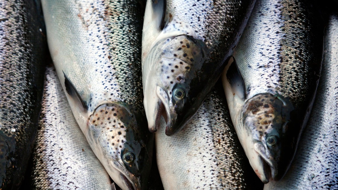 Group says Atlantic salmon catch hits all-time low