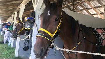 'Cpl. Cole' the horse makes its debut