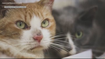 Abandoned cats ready for adoption