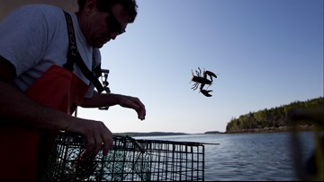 Maine lobster season slow so far, but price is steady