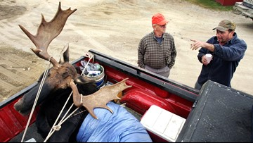 Hunters can now give Maine moose permits to wounded vets