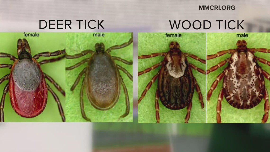Early spring fueling surge in Deer and Dog ticks