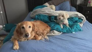 Sick pet? Most veterinarians are still seeing furballs during COVID-19, coronavirus pandemic
