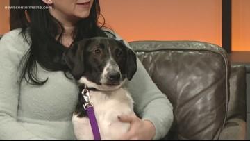 Fetch ME a Home: Lilac the dog