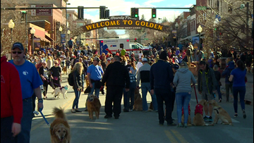 Well over 1,000 golden retrievers hang out in Golden, Colo.