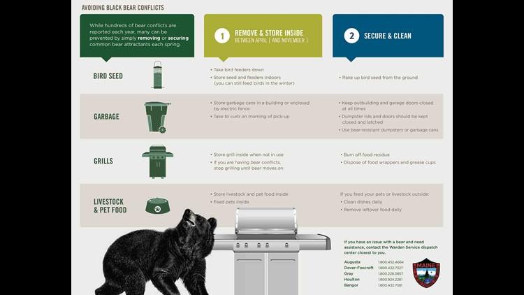 Bears info