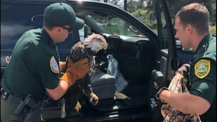 NH Trooper saves Bald Eagle from I-95