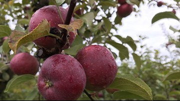 Where to go for peak apple season in Maine
