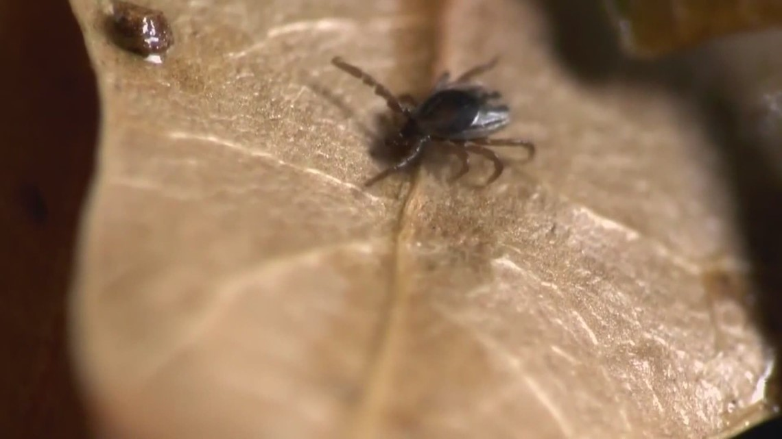 Experts urge Mainers to be careful about ticks are warm weather approaches