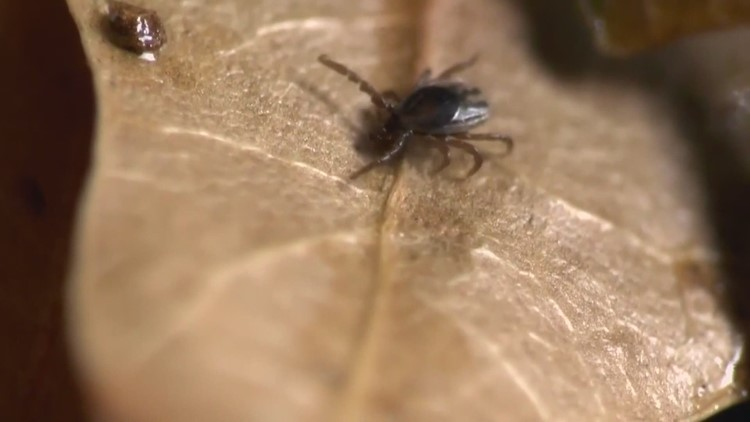 UMaine recruiting forest landowners to track ticks