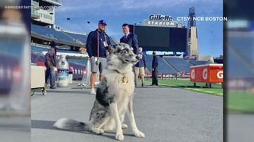 Patriots' Boyd to chase geese, protect field at Gillette Stadium