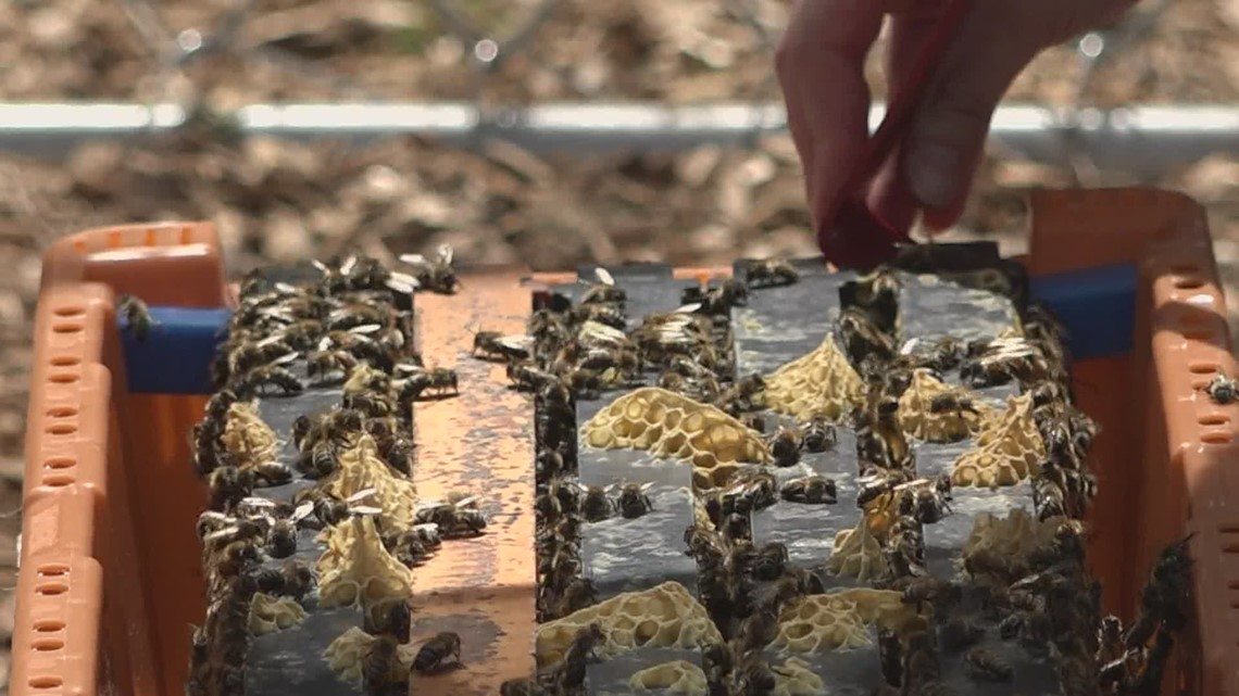 The Gorham High School Bee Club sets up hives for their bees