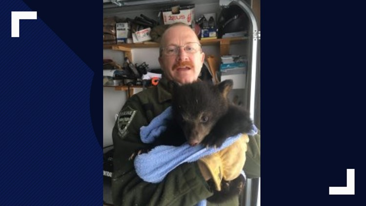 Orphaned bear cub rescued