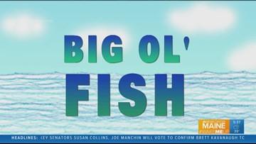 Big Ol' Fish 100618