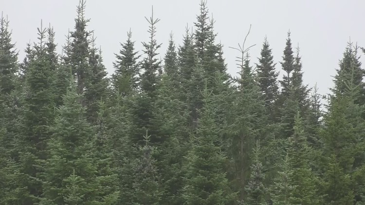 Maine's timber industry reaches out to educators to promote logging