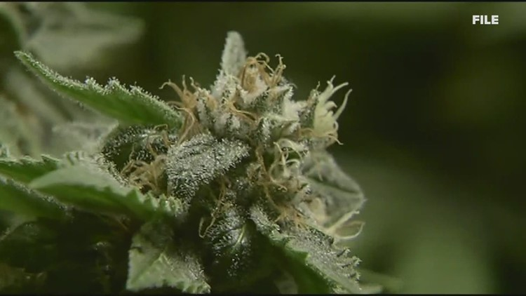Medical marijuana caregivers look to be included in regulation process