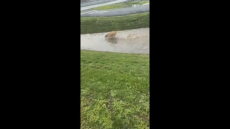 Puddle zoomies