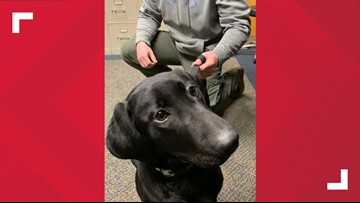 Bangor Police Department welcomes new K9 officer 'Jessie,' to be trained in tracking and narcotics