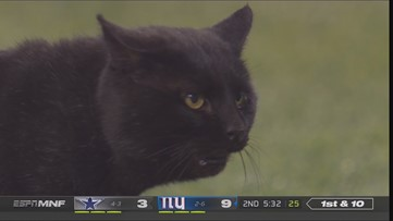 'That is a touchdown!' | Radio call of black cat on Monday Night Football