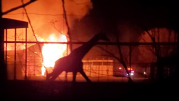 10 animals killed in fire at African Safari Wildlife Park in Port Clinton, Ohio: Grief counseling underway for staff