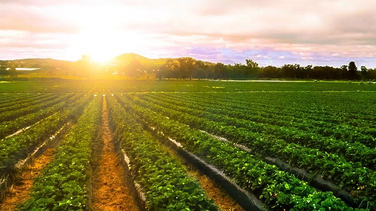 farm generic farming generic