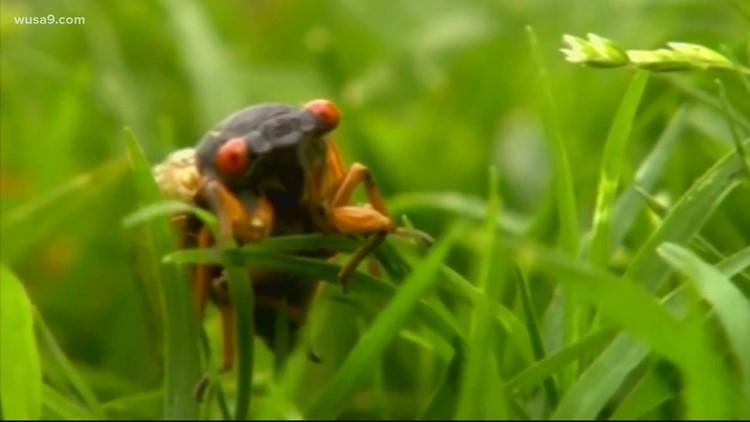 Brood X cicadas delay White House press plane   It's A DC Thing